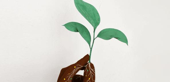 Sample Plants
