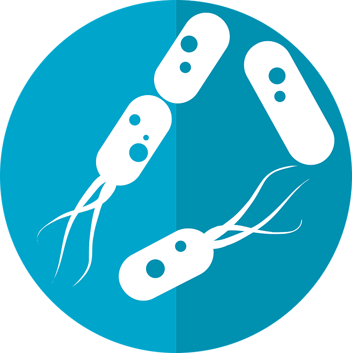 microbes of person microbiome